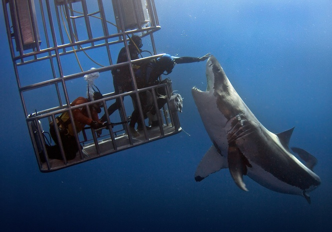 Shark touch.